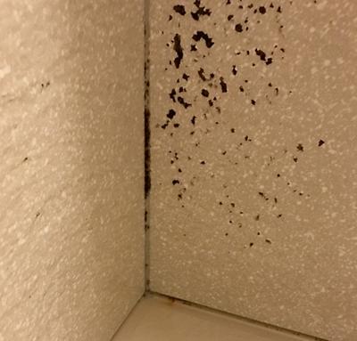 壁に発生したカビ