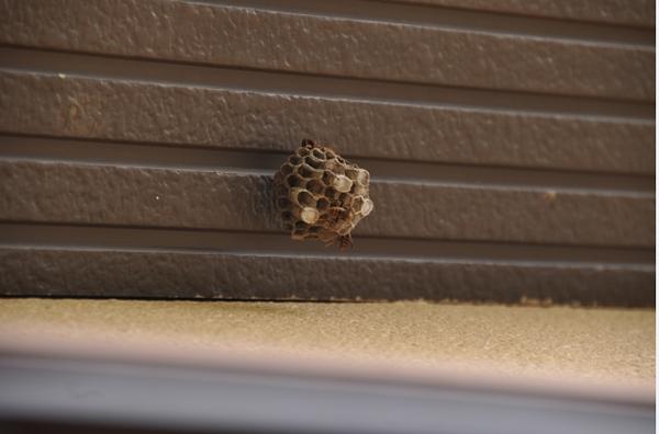 小さい蜂の巣の駆除