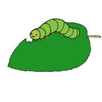 観葉植物についた虫