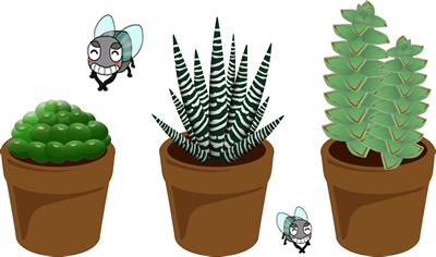 観葉植物の土に大量の虫