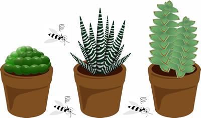 蚊を避ける観葉植物